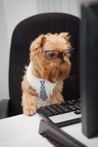 dog_manager